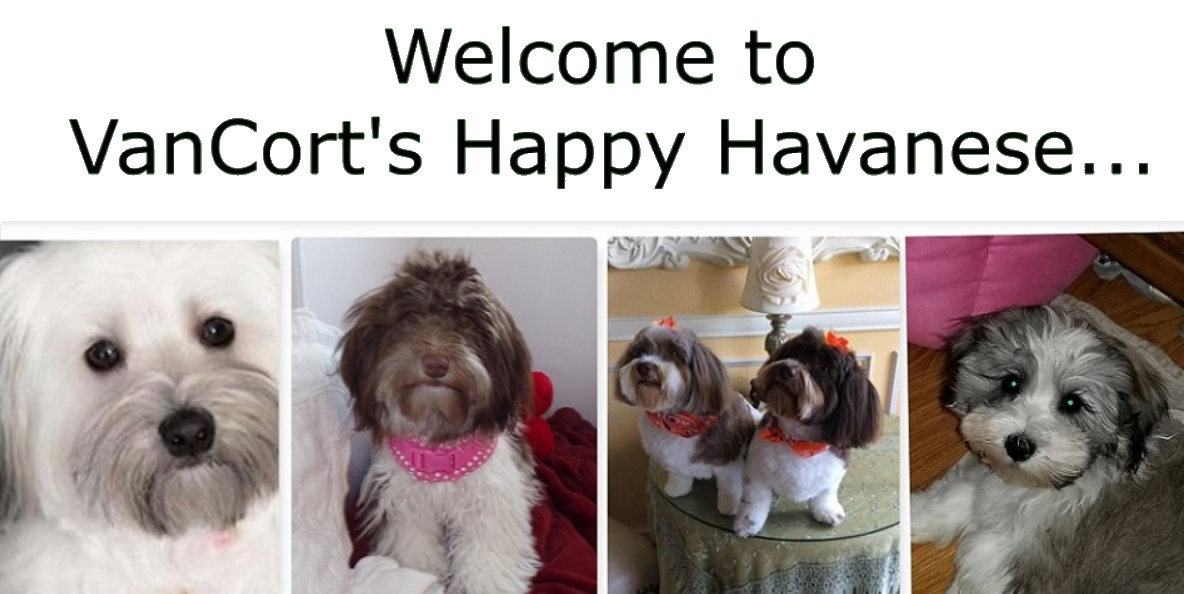 VanCort's Happy Havanese